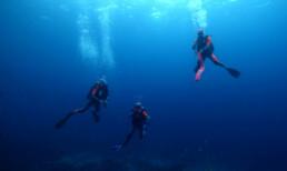 Tara Expedition_credits-david-hannan-oceanarkalliance-equipe-corail-remonte-malpelo
