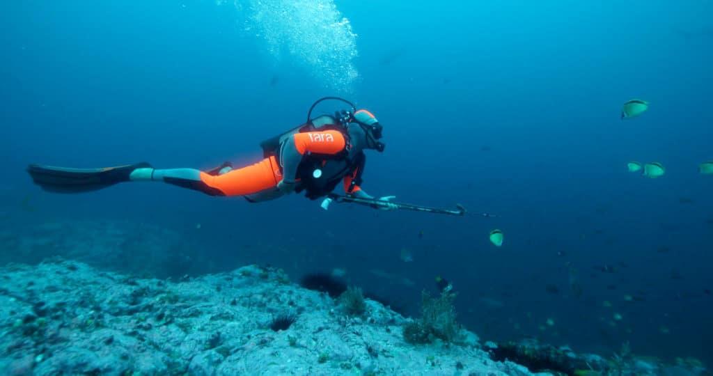 credits-david-hannan-oceanarkalliance-_tara-expeditions-foundation-plongeur-shark-tagging-malpelo